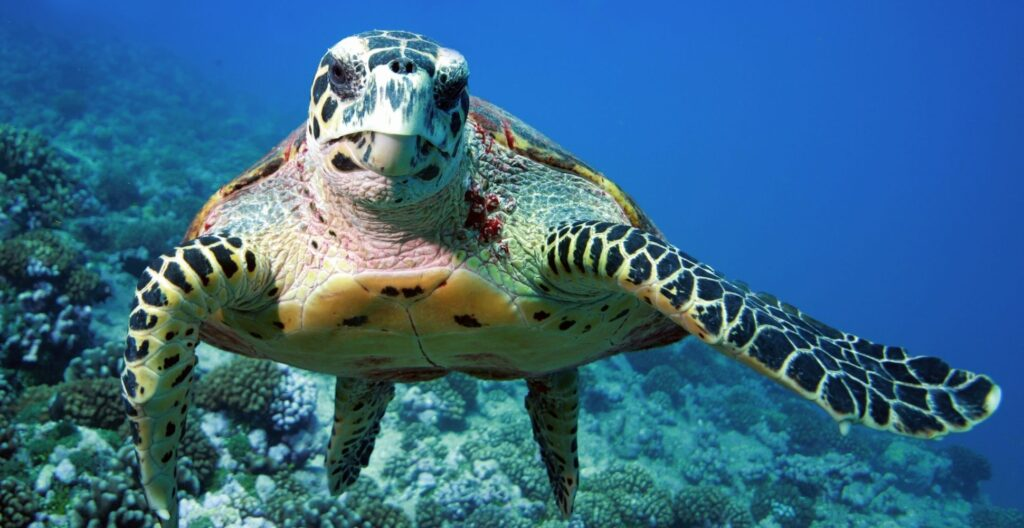 save-our-sea-turtles