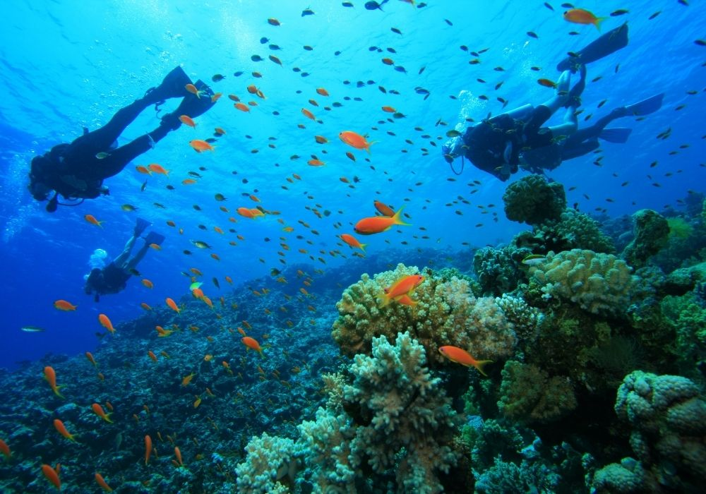 scuba-diving-ocean-with-corals-fish