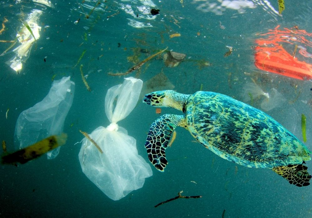 sea-turtle-ocean-plastic