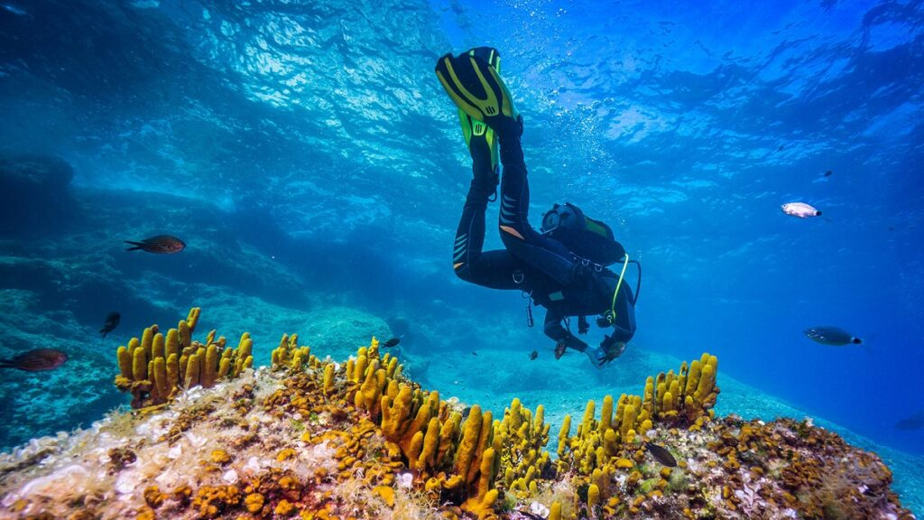 Best Freediving Wetsuits Reviewed